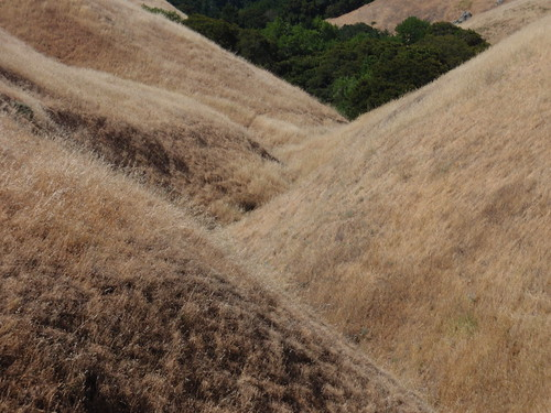 Brown Hillside