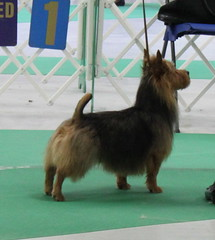 Beckham Oshkosh Best of Breed