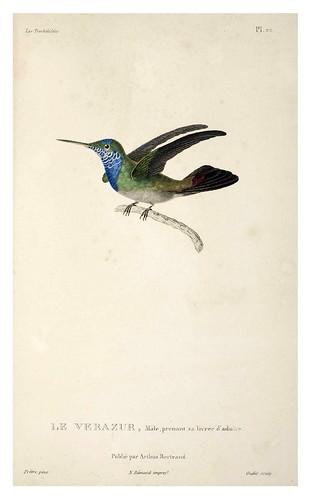 024-Les Trochilidées ou les Colibris et les Oiseaux-Mouches… 1832- René Primevère Lesson- DGZ–Göttinger Digitalisierungszentrum