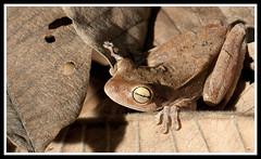 Where is the frog? (Edduardo de Oliveira) Tags: macro closeup bees insects goiânia goiás abelhas