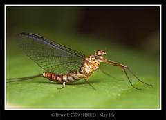 23.1 Mayfly ... s.i.d.e ...