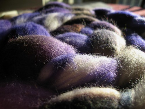 2009-01-20_twilight_merino_closeup.jpg