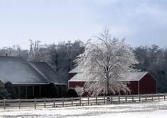 Winter Wonderland (WaltB 3) Tags: house tree ice farm kentucky icestorm january2009 waltbiii