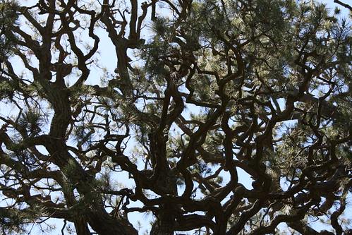 Wrinkly Tree