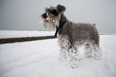 snowy dog (lomokev) Tags: winter dog snow cold canon eos brighton snowy nieve low fluffy ground perro 5d groundlevel canoneos5d ratseyeview roll:name=090202eos5d file:name=mg0068