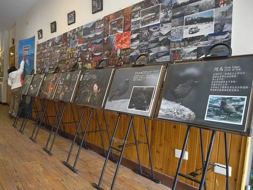你拍攝的 12武陵的侯鳥訪客看板。