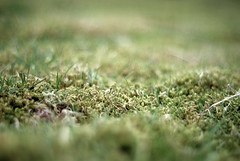 049 Moss (steeljam) Tags: flowers field moss wildlife study shoots favourite depth totteridge northlondon compostition a nikond80 steeljam