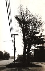 Competition (The Big Jiggety) Tags: road trees bw usa america blackwhite noir shadows maine newengland brunswick cables wires blanc fils blackwhitephotos abigfave mkprintthebigjiggety