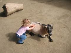 Niiiiiice goat