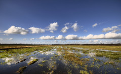 Flat and wet (Danil) Tags: nederland wetlands holland dutch wet flat swamp moeras leekstermeer leek groningen regen zonneschijn landscape daniel nikon d300 sigma1020 dedaniel landschap wideangle netherlands flatandwet