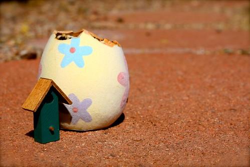 The Eggsperiment - Day 8