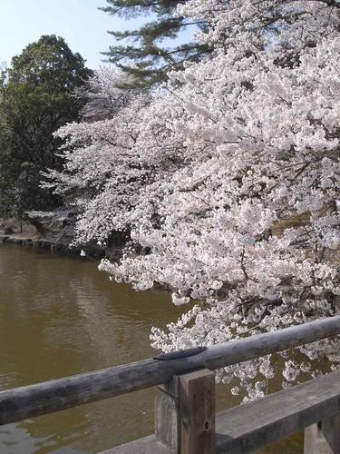 09-04-06【桜】@浮見堂(奈良公園)-03