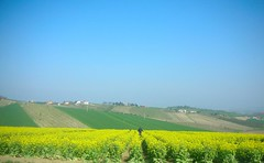....worker on yellow.... (rebranca46) Tags: italy panorama primavera nature yellow landscape spring bluesky campagna giallo fields worker sanclemente 2009 romagna colza contadino rebranca