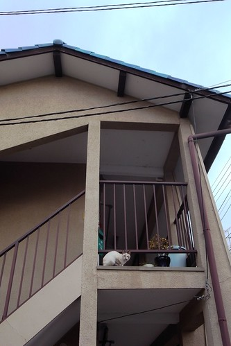 Today's Cat@20090418