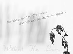Suk Gaye Kumlayee. (Akiratghanare) Tags: plant love images dried sikh punjabi waheguru singh khalsa godlove gurbani gursikh birha vichoda