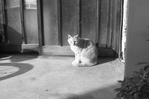 Today's Cat@20090502