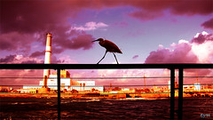 Walking On The... (Yaniv Ben Simon) Tags: bridge sunset sea bird reading israel telaviv powerplant banister powerstation seaport yanivbensimon wwwybscoil