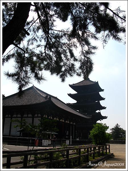 090508_01_奈良公園