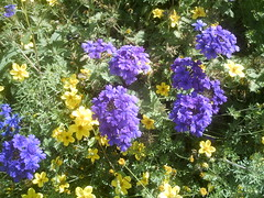 IMAG0079 (Ian Faz) Tags: flowers plants tress nessgardens