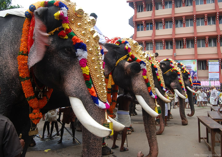 thrissur pooram - Elephant grooming centre at Paramekkavu temple