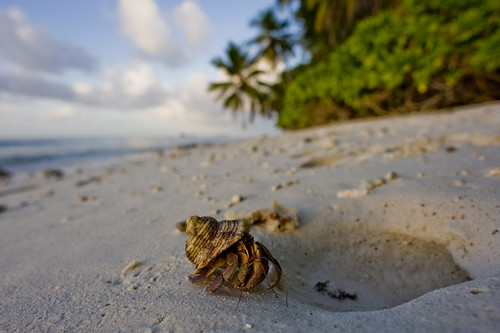 homeward bound - Canon Point, Diego Garcia, B.I.O.T.