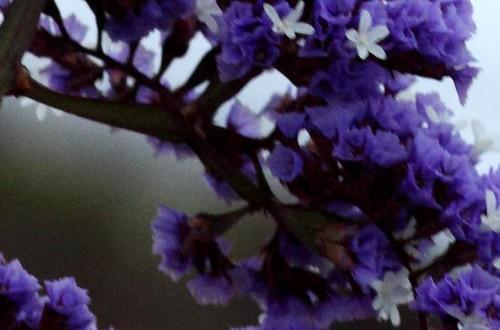 IMAGE: http://farm4.static.flickr.com/3308/3555290059_80f7846161.jpg?v=0