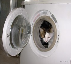 Fusillo in the washing-machine ...again! (*DaniGanz*) Tags: tag3 taggedout cat tag2 tag1 kitty washingmachine gatto kittie micio lavatrice fusillo daniganz