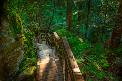 Lynn Canyon Descent (Jeff Engelhardt) Tags: park wood trees canada green nature leaves lines vancouver stairs forest photoshop canon woodland bc post path britishcolumbia rail lynncanyon hdr highdynamicrange lightroom leadinglines photomatix tonemap 40d jeffengel jeffengelhardt