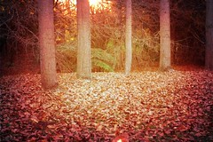 The Night After Tomorrow (Stephen.James) Tags: autumn trees sunset red orange brown sun texture leaves hope twilight strength newmoon vampires