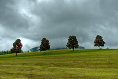 Four trees from the car (A.G.S.) Tags: auto trees storm tree car clouds speed landscape austria sterreich day pentax hill hdr ags k200d regionwide flickrunitedaward discoveryphotosaward