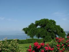 ancora primavera (antocsc) Tags: italy albero lagomaggiore yourcountry