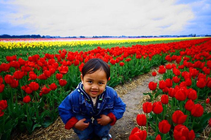daniell n tulip