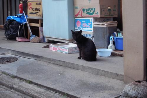Today's Cat@20090619
