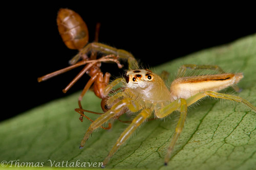 Ant Exoskeleton