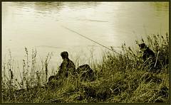Fisherman's Friend (sidewinder54 (Closed For Business)) Tags: england brown black green grass river landscape landscapes countryside fishing fisherman riverside trent rivers rod toned nottinghamshire kartpostal