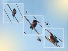 long beaked bird (lolife_pirate) Tags: sky bird photoshop square wire long colorfull beak frame kingfisher sanyo s650