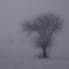 Solo (Lumase) Tags: winter snow tree topf25 fog square topf50 topf75 searchthebest solo soe marillion wintry palabra somewhereelse the4elements mywinners abigfave lumase luigimasella infinestyle mondocafeclub