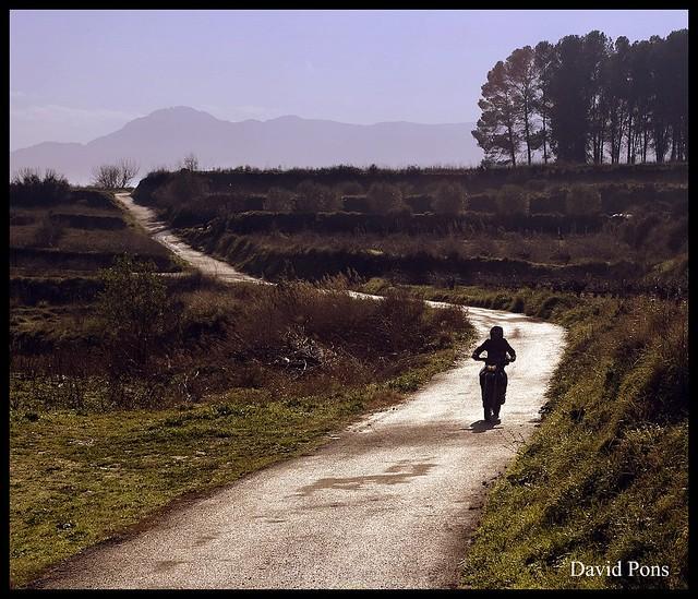 the rider photo