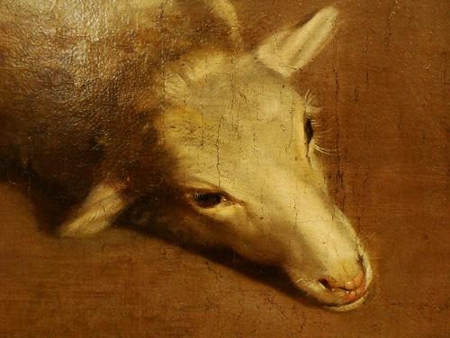 q-lamb