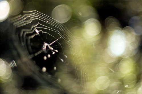 """Fiction is like a spider's web, attached ever so lightly perhaps, but still attached to life at all four corners"""