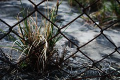 In Valley IV (CK's Got Shots ) Tags: grass fence rusty valley dragondaggerphoto