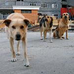 Бифштексы из собак