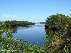 IMG_1534-Ding-Darling-Sanibel-Cove-In-Mangroves