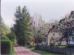 My Swedish house, May 2004 (victorious felines) Tags: cottage cherryblossom springtime swedishhouse mansardroof periodhouse swedishvilla gingerbreadporch