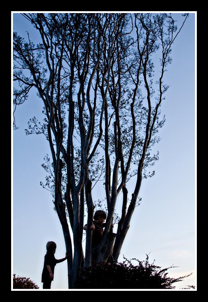 boys-in-tree1