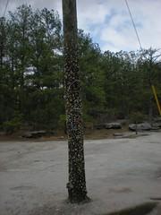 6 - Bubble Gum Pole