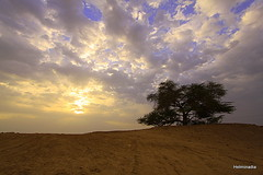 The Strength of the Lonely (Helminadia Ranford(New York)) Tags: sky sun tree nature beauty clouds sunrise bahrain goodfriday