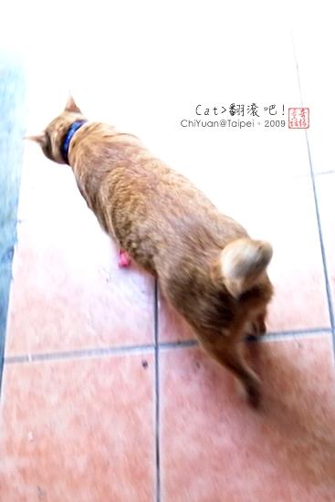 Cat。翻滾吧!01