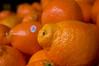 Orange Tangelos (dogwelder) Tags: sanfrancisco california fruit april oranges zurbulon6 2009 zurbulon ormaybetangelos