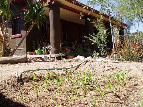 house and garden - 04